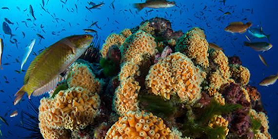 Imagen de Desde la trinchera de la conservación ambiental